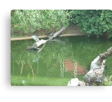 Herons enjoying a relaxing day on a stump in a lake Canvas Print