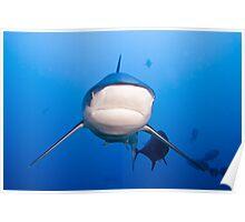Oceanic White Tip - Beqa Lagoon 2011 Poster