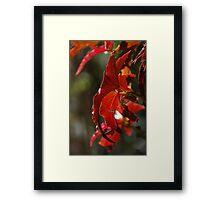 Angel Wings Begonia Leaves Framed Print