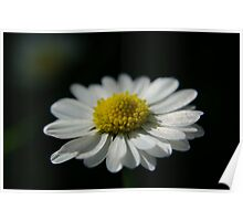 Easter Daisy Poster