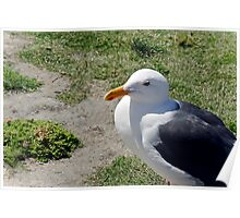 See-Gull ! Poster