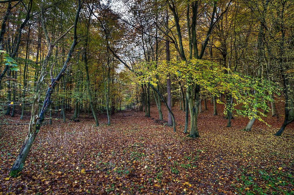 Autumn woodland avenue, Penn by Gary Eason