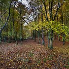 Autumn woodland avenue, Penn by Gary Eason + Flight Artworks