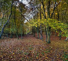 Autumn woodland avenue, Penn by Gary Eason