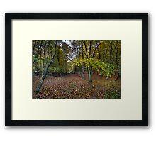 Autumn woodland avenue, Penn Framed Print