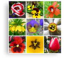 Spring Flower Collection  Canvas Print
