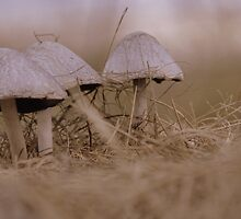 Modelling  Mushrooms by naturone