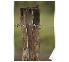 Fence Post with Barb Wire - Well Plains, QLD Poster
