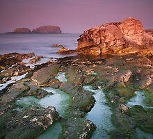 Sheep Island View by Paul McSherry