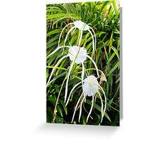 Body, Mind, & Spirit-  Spider Lilies Greeting Card