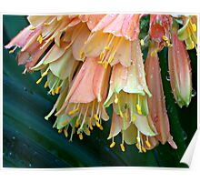 Flowers with Bug Poster