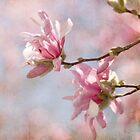 Magnolia Stellata by greenzinnia