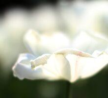 white by bigzed