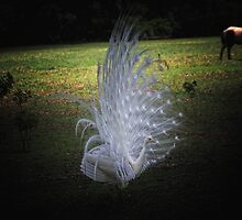 White Peacock - Magnolia Gardens by photosan
