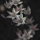 Delicate by guppyman