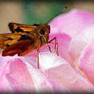 Baby Butterfly by jodik75