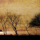 Golden Trees by Marzena Grabczynska Lorenc