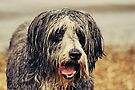 """The """"wet look"""" by Anne Staub"""
