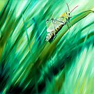 Cri Cri - oil painting of a cricket in the grass by James  Knowles