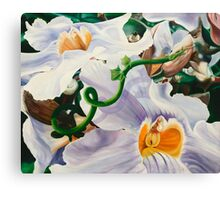 Sensualaticia - oil painting of a Mexican climbing vine Canvas Print