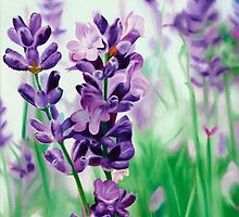 Lavender Lovers - oil painting of lavender blossoms by James  Knowles
