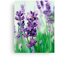 Lavender Lovers - oil painting of lavender blossoms Canvas Print