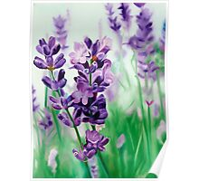 Lavender Lovers - oil painting of lavender blossoms Poster