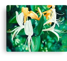 You are my Honeysuckle - oil painting of honeysuckle Canvas Print