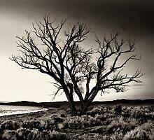 Lake Washoe Nevada by Jeffrey  Sinnock