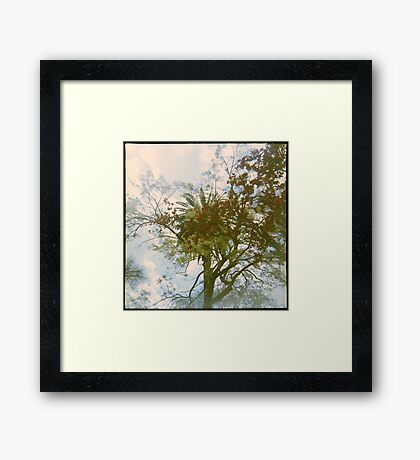 The City of Trees Framed Print