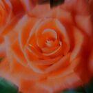 Orange Sherbert Glow by kkphoto1