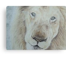 Casper the White Lion Metal Print