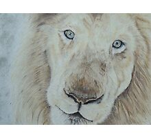 Casper the White Lion Photographic Print