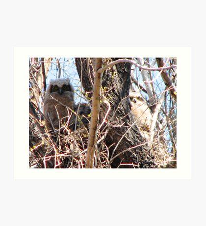 Three baby Great Horned Owls Art Print