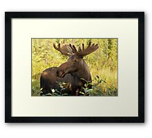 Mornin Y'All Framed Print