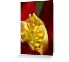 Velvet Wrap Greeting Card