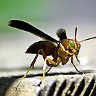 Wasp by venny