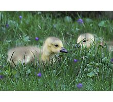 A waddling Time Photographic Print