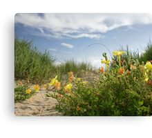 Sand Dune Wildflowers Canvas Print