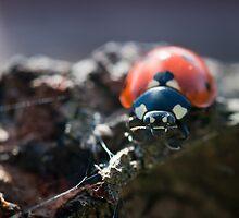 Ladybug in spring light by lautsu