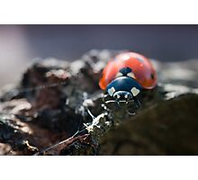 Ladybug in spring light Photographic Print