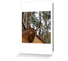 untitled #141 Greeting Card