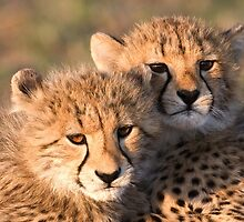 Sibling Comfort by Michael  Moss