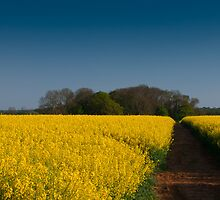 Yellow Carpet by verwoody