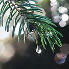 Drops by RosiLorz