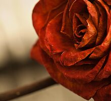 Dried Rose by DLiuPhoto