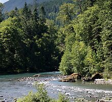 Elwha River, Olympic National Park, Washington by Stacey Lynn Payne