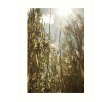 In the tall grass Art Print