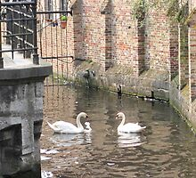 Belgian Swans by Patricia127