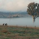 Misty Dawn - Wodonga by Timo Balk